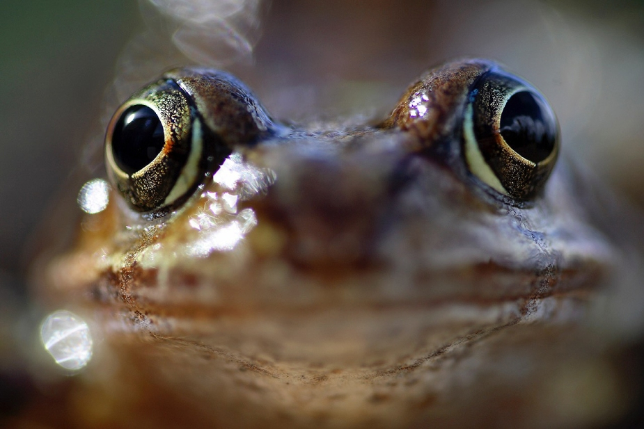 The image of a frog than Canon wanted but a Tamron lens captured. Image by Martin Middlebrook.
